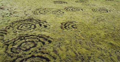The Mysterious Origin Behind These 'Fairy Circles' Has Been Debunked