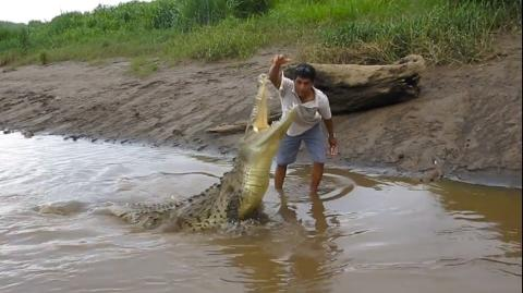 This man was filmed hand-feeding chicken to a crocodile in the wild
