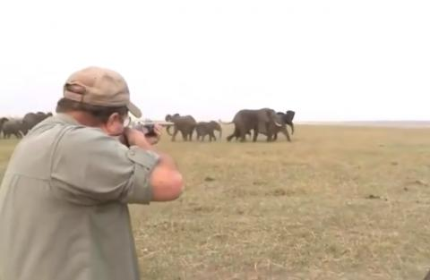 Elephants Charge At Hunters After They Shoot At A Member Of Their Herd