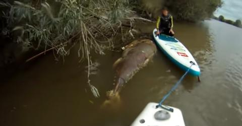 River Monsters! These Men Spotted A Giant While Kayaking On River Severn