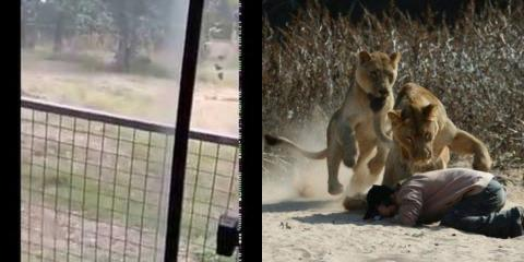 Man Scales 20ft Zoo Enclosure And Gets Mauled To Death By Lions Before Distressed Onlookers