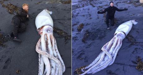 This Giant Squid Was Found Washed Up On A Beach But Its Cause Of Death Is Shrouded In Mystery
