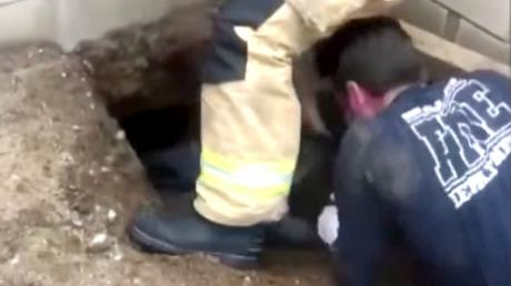 They Heard Strange Noises Coming From This Hole, When They Looked Inside They Couldn't Believe Their Eyes