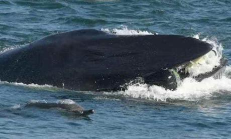 This Man Was Swallowed Alive By A Whale - But Miraculously Survived