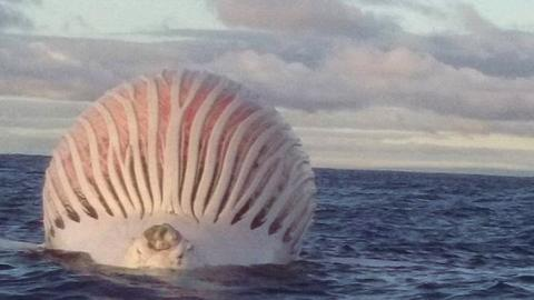 This Mysterious Ball Appeared In The Ocean - And It Turned Out To Be Incredibly Dangerous