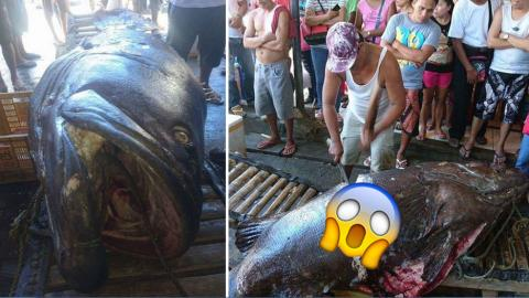 He Caught An Enormous Fish - But What He Discovered Inside Was Even More Shocking