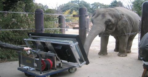 This Study Shows That Asian Elephants Have One Very Surprising Talent