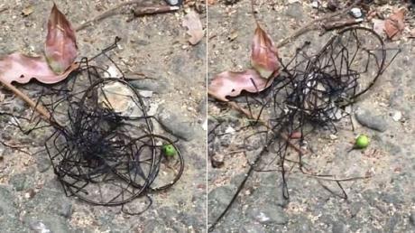 This Is The Truth Behind The Bizarre Creature Filmed In Taiwan