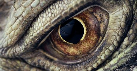 This Strange Medical Condition Caused A Woman To See People Turn Into Dragons Before Her Very Eyes
