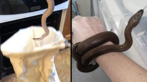 Stockport Woman Finds Snake In Oven As She Opens Door To Cook Chips