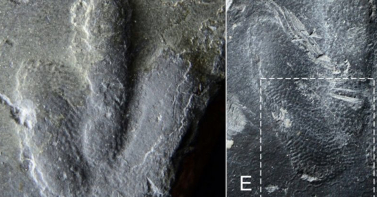 Recently Discovered Dinosaur Tracks Reveal What Their Skin Really Looked Like