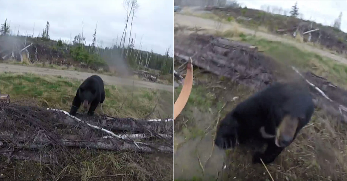Watch What Happens When A Black Bear Attacks A Hunter In Canada