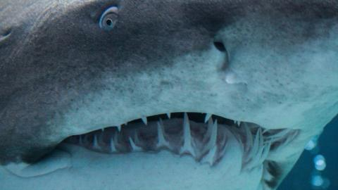 Archaeologists in Kentucky Discover the Head of a Monster 330-Million-Year-Old Shark