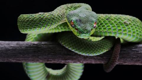 These Five Animals Can Sense Things Humans Can't