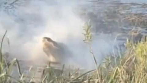 Shocking video of alligator attacking and devouring a flying drone