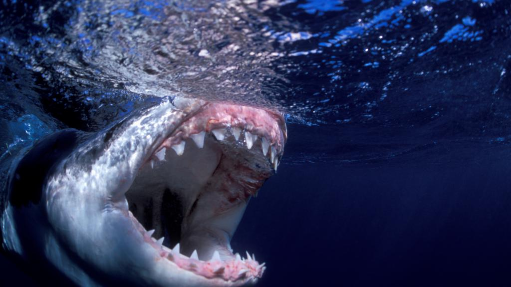 Ranked: The World's Most Dangerous Predators Ranked - It's Not What You'd Expect