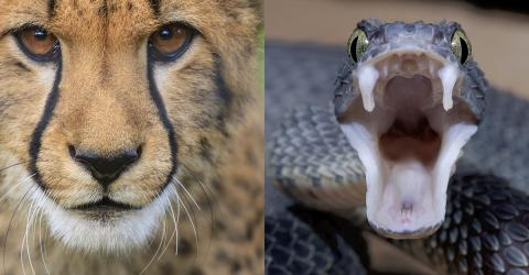 The Amazing Fight Between A Leopard And A Python