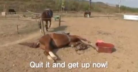 This Horse Plays Dead Every Time Someone Tries To Ride It