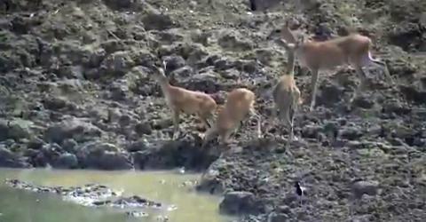 This Deer Had No Chance Against A Predator