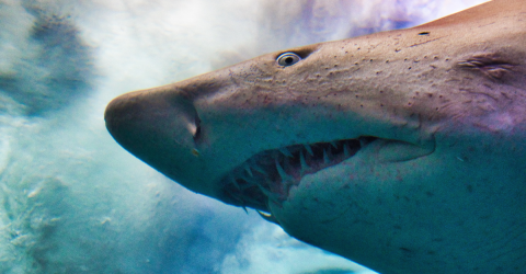 A Great White Shark Died After Getting Stuck In A Cage That Divers Should Not Have Been Using