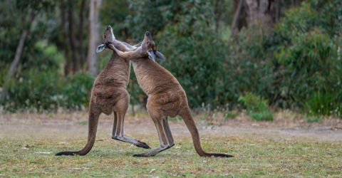 Chilling Footage Of These Animals Fighting Caused A Stir On Social Media