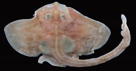 Fisherman Left Astounded After Hauling Strange Three-Legged Creature Out Of The Atlantic Ocean