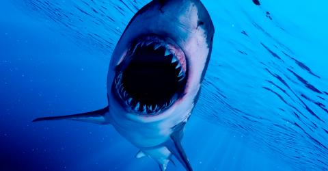 Meet the scariest sharks to swim this Earth...