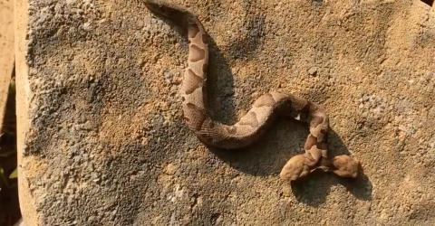 This Woman Was Left Terrified When She Discovered A TWO-HEADED Snake In Her Garden