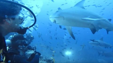 These divers were given the fright of their lives when they were approached by a group of bull sharks