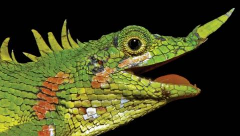 Lizard Lost to Science For 130 Years Has Finally Been Rediscovered
