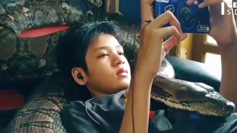These Huge Snake Videos Have Been Taking the Internet By Storm
