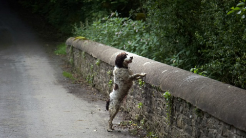 Nearly 600 Dogs Have 'Committed Suicide' by Jumping off This Bridge in Scotland