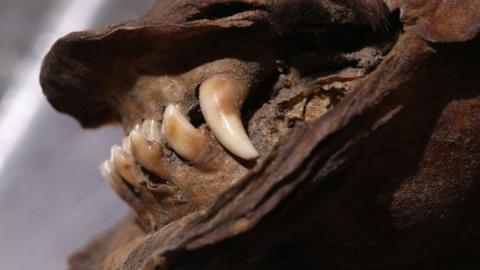 14,000-year-old puppy found frozen still digesting last remaining wooly rhino