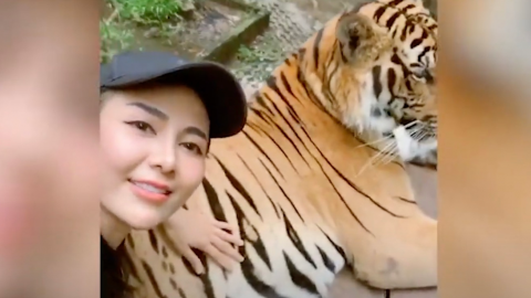 She grabbed tiger testies for internet attention, she only got criticism