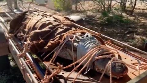 Australian rangers capture a 350KG crocodile the size of a car