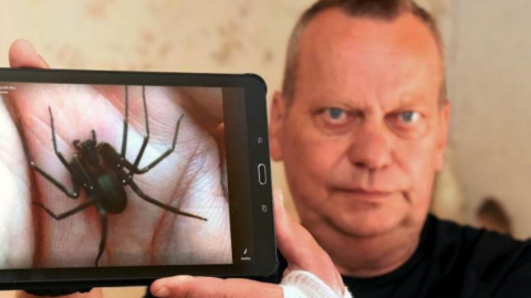 'As if it was burning my flesh': This man almost needed his arm amputated after being bitten by a spider