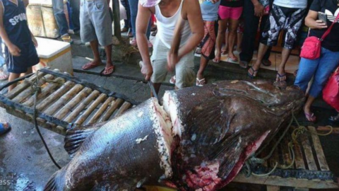 He caught an enormous fish but what he discovered inside made his jaw drop