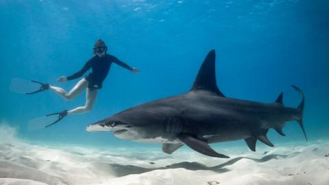 6 Surprising Animals You Didn't Know Were Deadlier Than Sharks