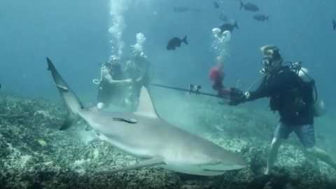 This video shows the up close and personal reaction sharks have to human blood