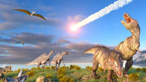 Birds Are the Last Living Dinosaurs And We Know Why They Survived