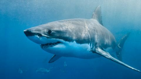 This Footage of a 'Satanic' Shark Is Makes Us Not Want to Go Swimming Ever Again