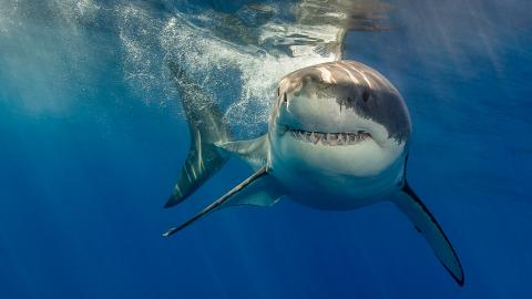 Woman Dragged Into Crocodile Infested Water By A Shark Lived to Tell the Tale