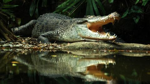 This poor crocodile was left covered in blood after tourists threw rocks at him