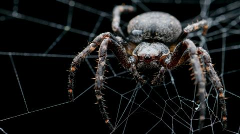 A scientist stumbled upon the most terrifying spider in the forest