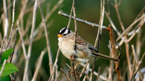 Study Proves Lockdown Had an Unsuspected Impact on Bird Song
