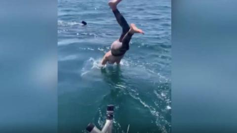 A Man Thinks He's Swimming With a Harmless Shark But Is Very Wrong (VIDEO)
