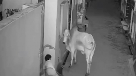 This video of a boy saving his grandmother from a bull attack has recently gone viral