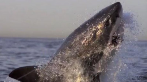 Slow Motion Video Shows Off The Terrifying Power Behind A Shark Attack (Video)