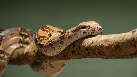 Residents' terror as enormous boa constrictor skins found in back gardens in France