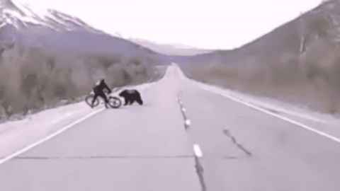 Two cyclists attacked by a wild bear in the middle of the road in Russia